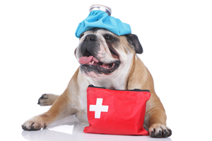 Emergency Kit For Pets