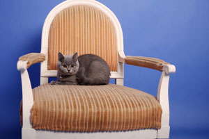 Cleaning Furniture From Pets