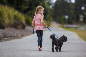 Child Walking Dog In Watertown